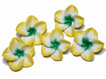 Frangipani Blüte gelb-weiss-grün, 5 Stück